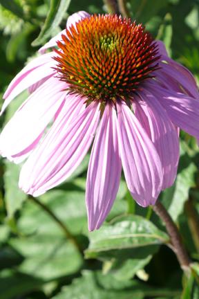Spflower