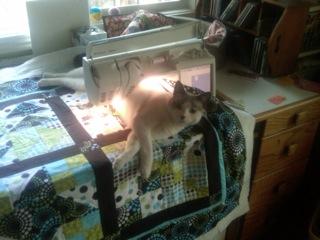 Juno helping