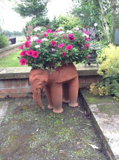 Lornas_elephant