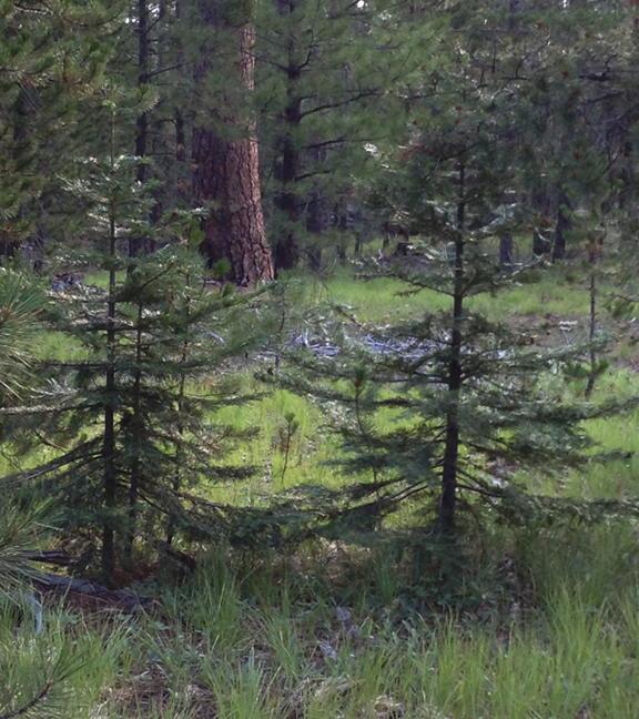 Tree_7889-web