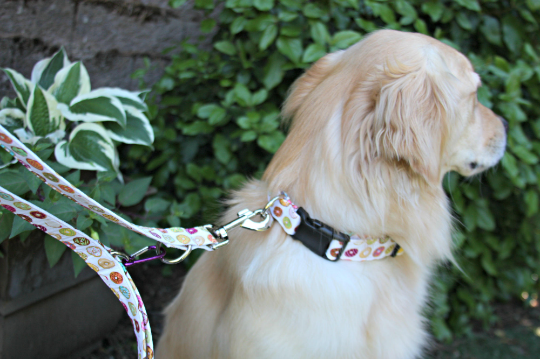 Sewing Ideas for Pets: Adjustable Dog Collar